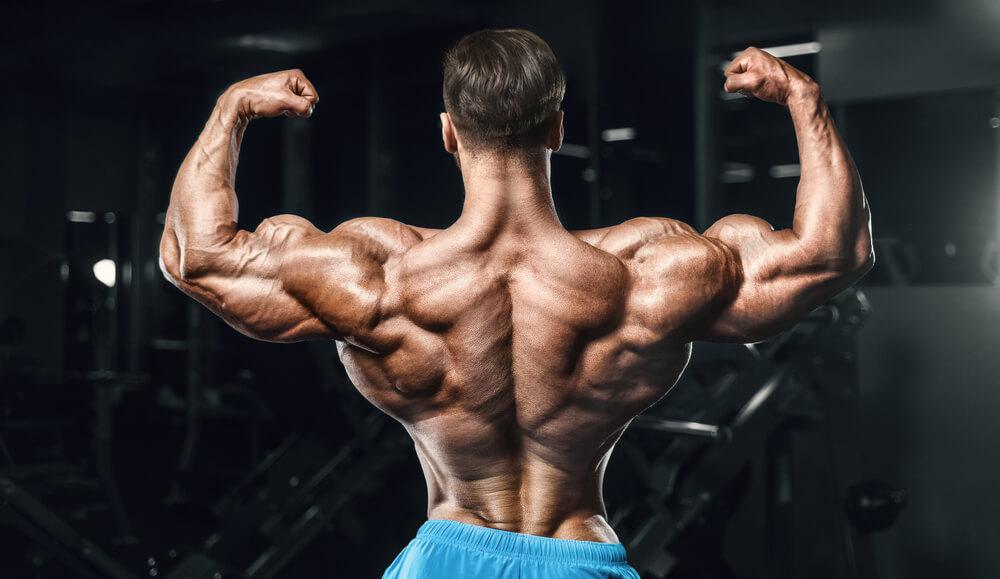 Die besten natürlichen Steroide