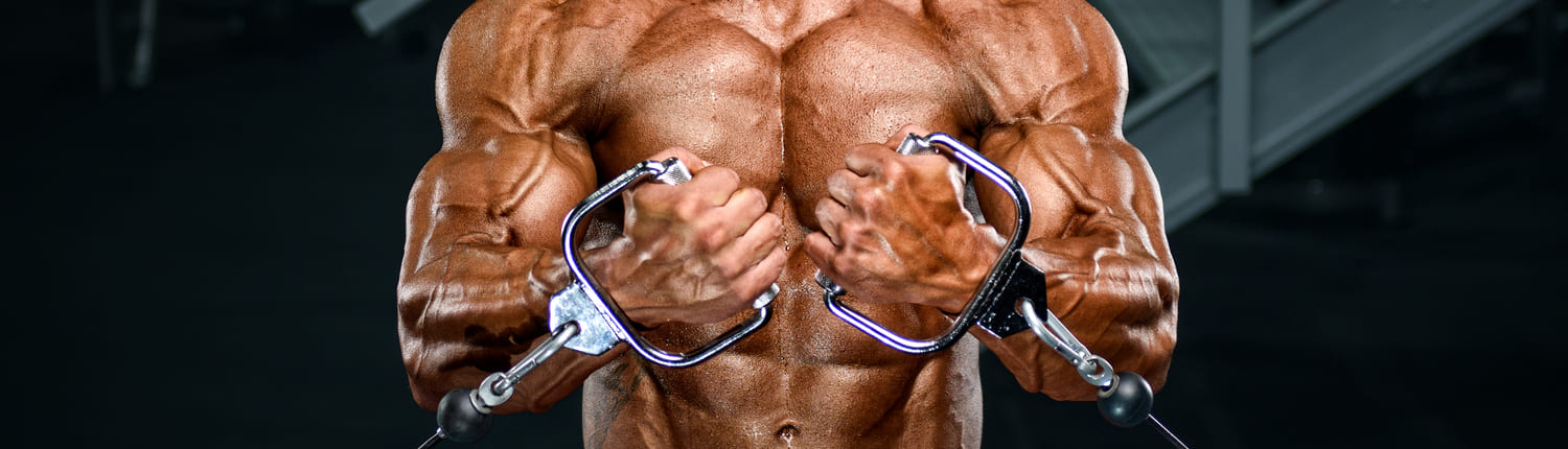 Extreme Muscle Builder